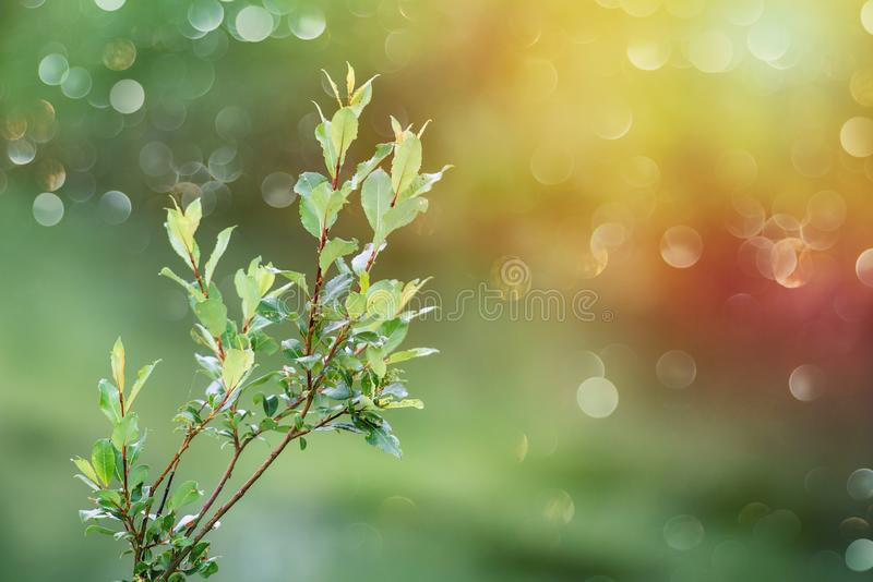 Tree branch with green leaves - blurred bokeh background royalty free stock photos