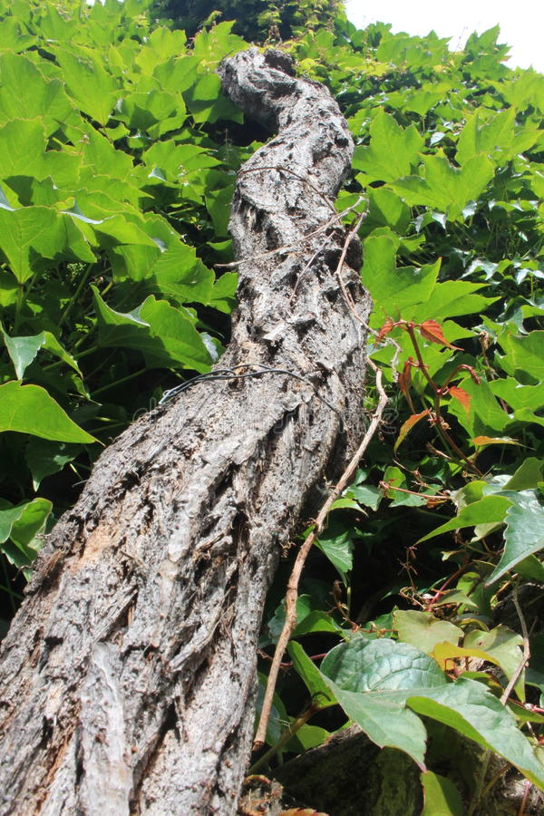 Tree Branch with green leaves royalty free stock photos