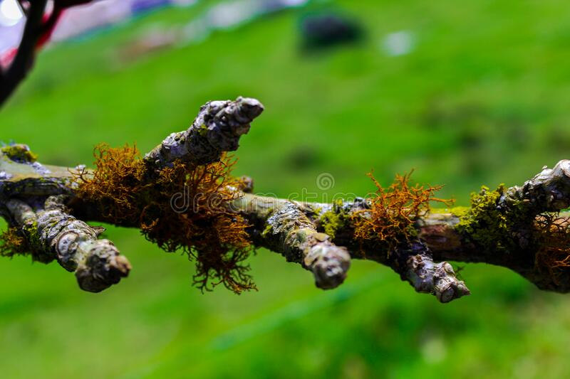 Tree branch with moss and lichen. Trunk and bark details. Nature background royalty free stock photos