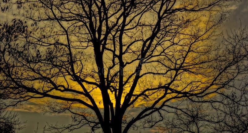 Tree, Branch, Nature, Yellow Free Public Domain Cc0 Image