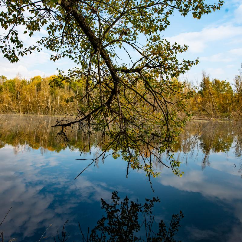 Tree branch over the surface of the water in the river stock images