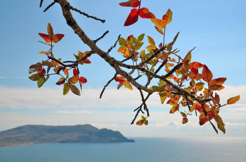 Autumn branch pistachios closeup royalty free stock image