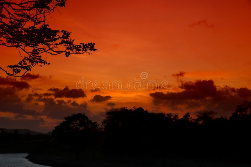 Tree and branch silhouette at sunset in sky beautiful landscape image on nature : with copy space. For add text stock images
