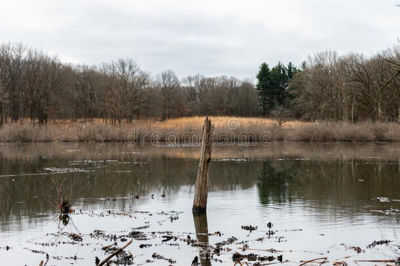 Tree Branch Sticking out of a Pond in a Forest during Winter in Suburban Willow Springs Illinois stock photos
