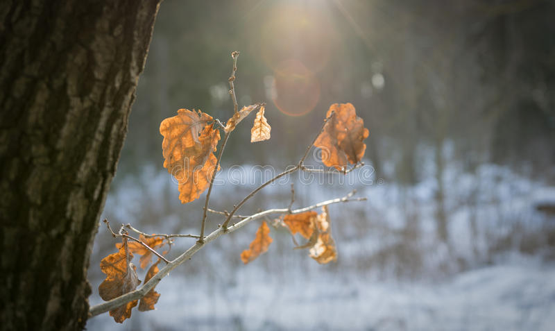 Tree branch in winter. With sun royalty free stock photos