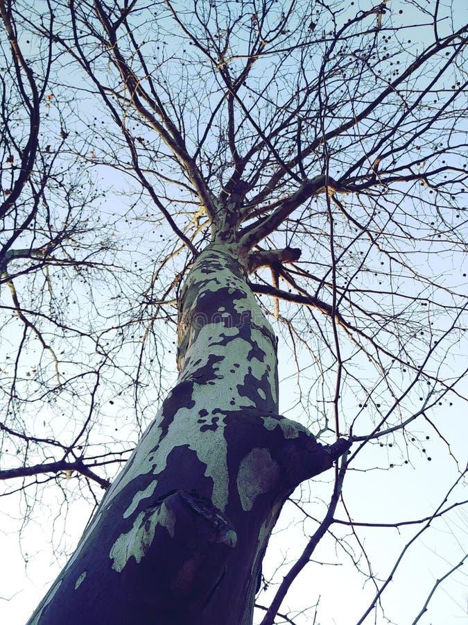 Tree, Branch, Woody Plant, Leaf Free Public Domain Cc0 Image