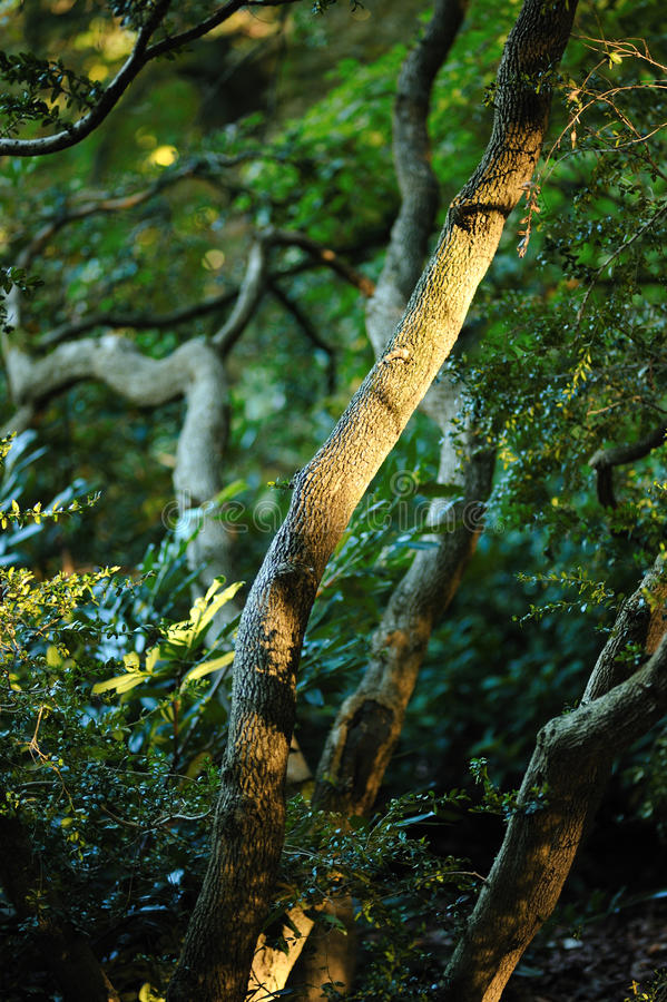 Download Tree Branches Royalty Free Stock Images - Image: 21325619