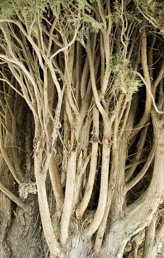 Download Tree Branches Royalty Free Stock Image - Image: 26623186