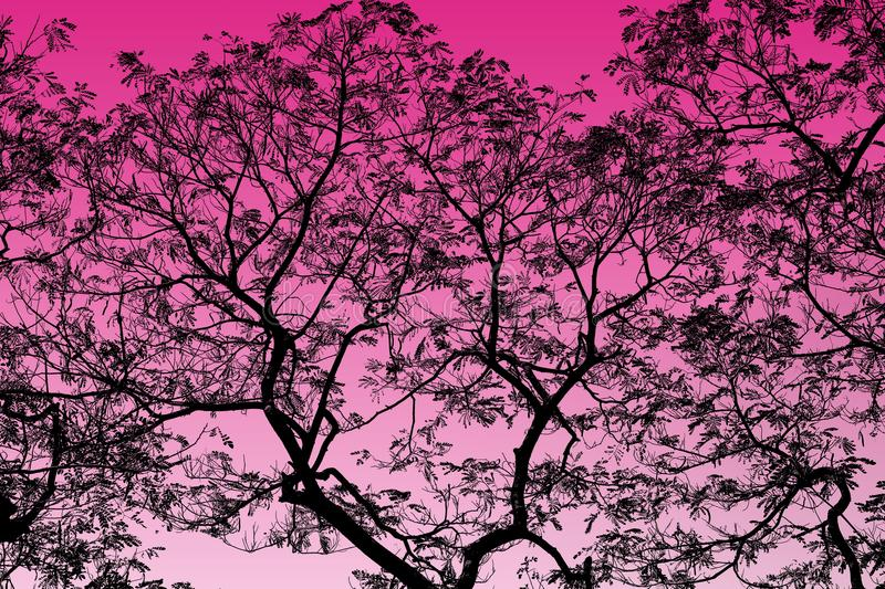 Abstract Black Tree Branches on background Pink highlight royalty free stock image