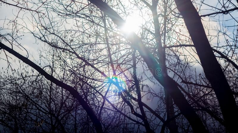 Tree branches on the background of sunlight. Sky, clouds, dawn, sunset. Forest, Park, nature. Tree branches on the background of sunlight. Sky and clouds, dawn stock photography