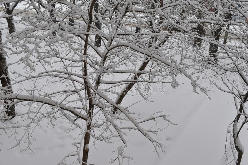 Tree branches in the big snow. stock photography