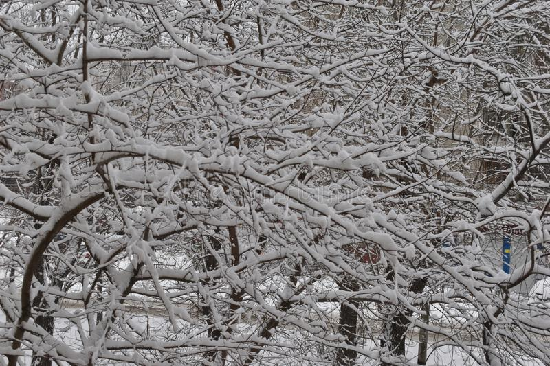 Tree branches in the big snow. royalty free stock photos