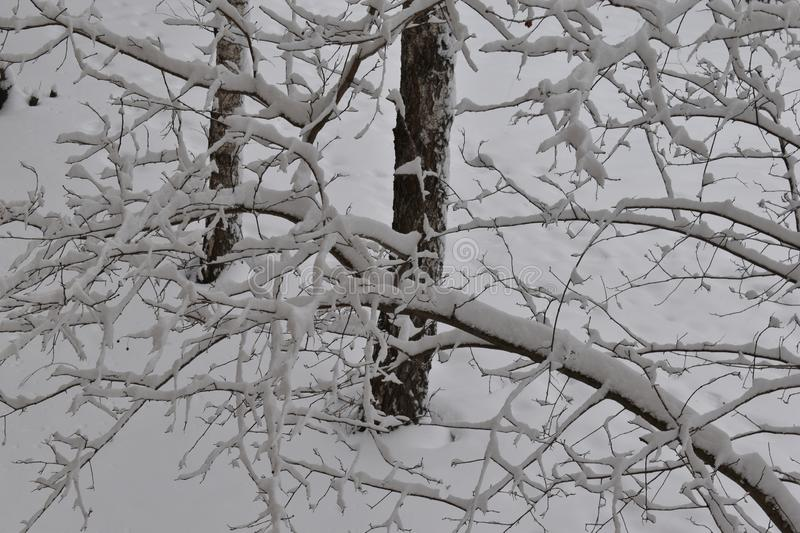 Tree branches in the big snow. stock images