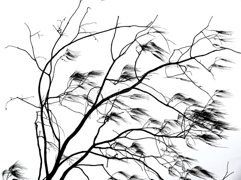 Tree branches blowing in wind royalty free stock photos