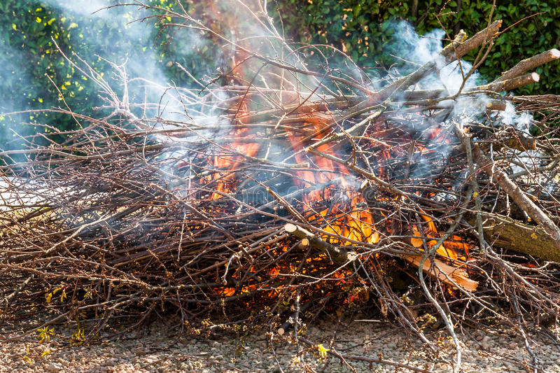 Tree branches burning. Fire burning dry tree branches stock photo