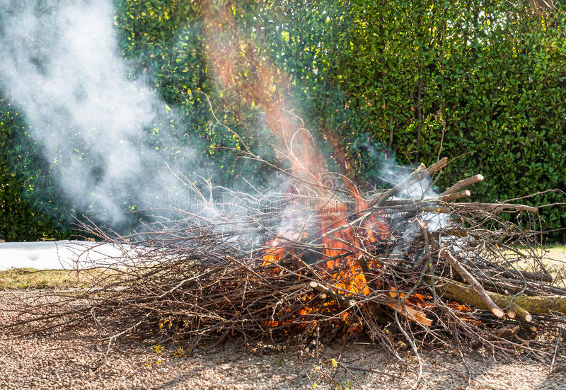 Tree branches burning. Fire burning dry tree branches stock image