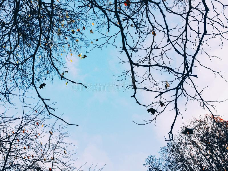 Tree branches in clear winter blue sky royalty free stock images