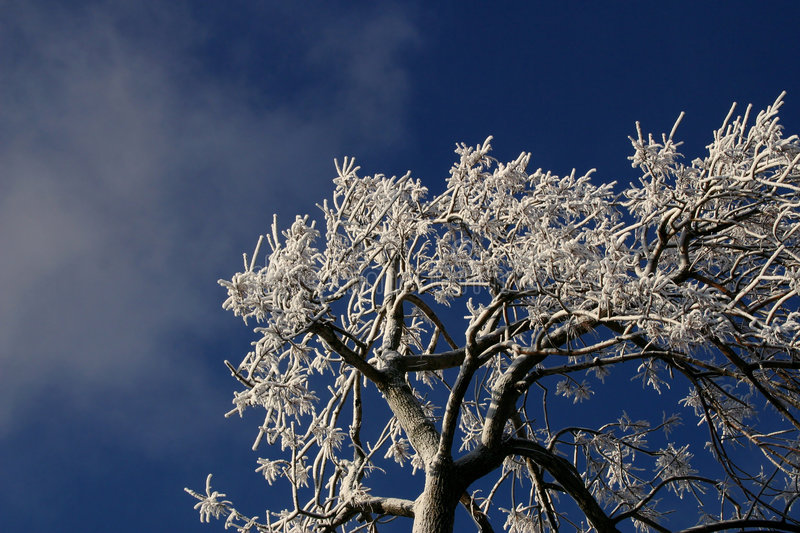 Download Tree Branches Covered With Ice. Stock Photo - Image: 76806