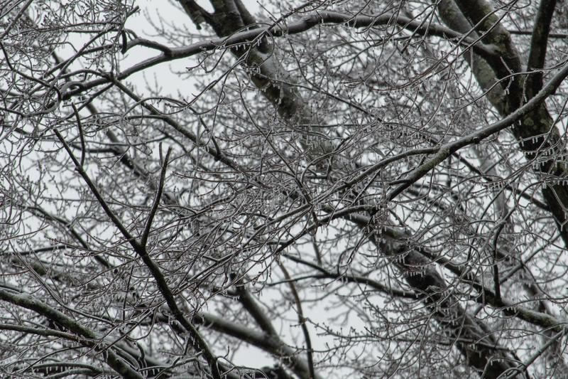 Tree Branches Covered in Ice after Winter Storm stock photo