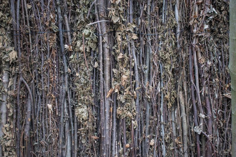 Tree branches fence. Decorative fence made with tree branches, natural, nature, old, wood, garden, spring, background, roots, moss, material, design, texture stock image