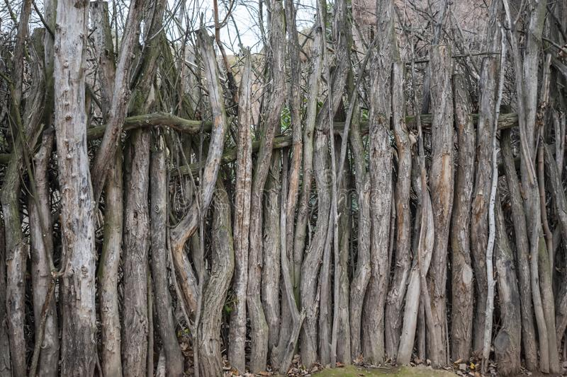 Tree branches fence. Decorative fence made with tree branches, natural, nature, old, wood, garden, spring, background, roots, moss, material, design, texture royalty free stock photo