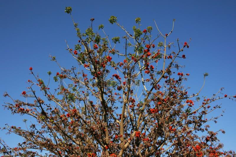 Tree branches full of big orange flowers in spring garden, Valencia, Spain stock photos