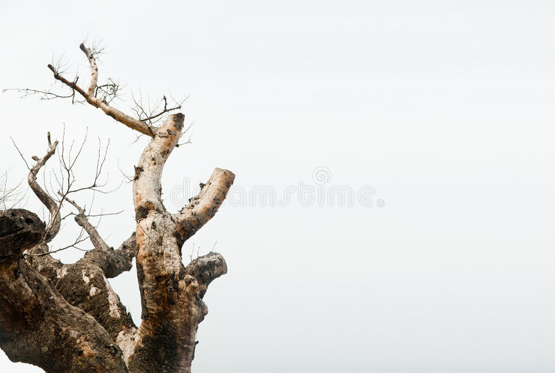 Download Tree branches growing up stock image. Image of branches - 11380339