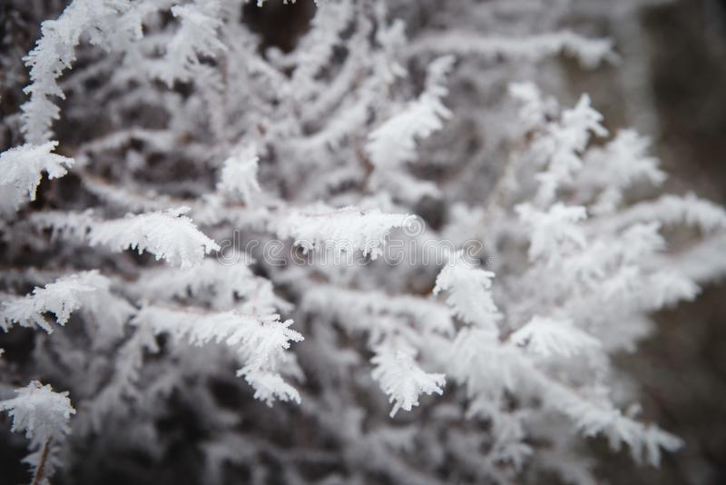 Tree branches iced over, and were covered with frost and snowflakes on a frosty winter stock image
