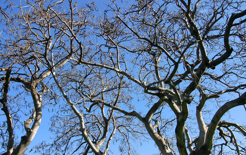 Download Tree Branches Isolated Against Blue Sky Stock Photo - Image of reaching, background: 1688