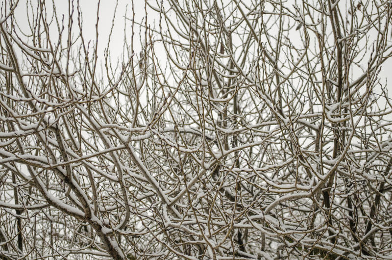 Tree branches without leaves. Covered with snow royalty free stock photo