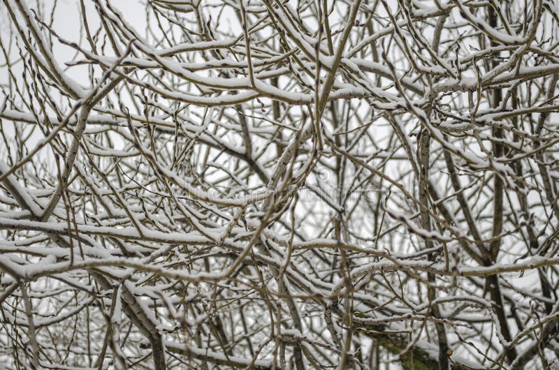 Tree branches without leaves. Covered with snow royalty free stock photos