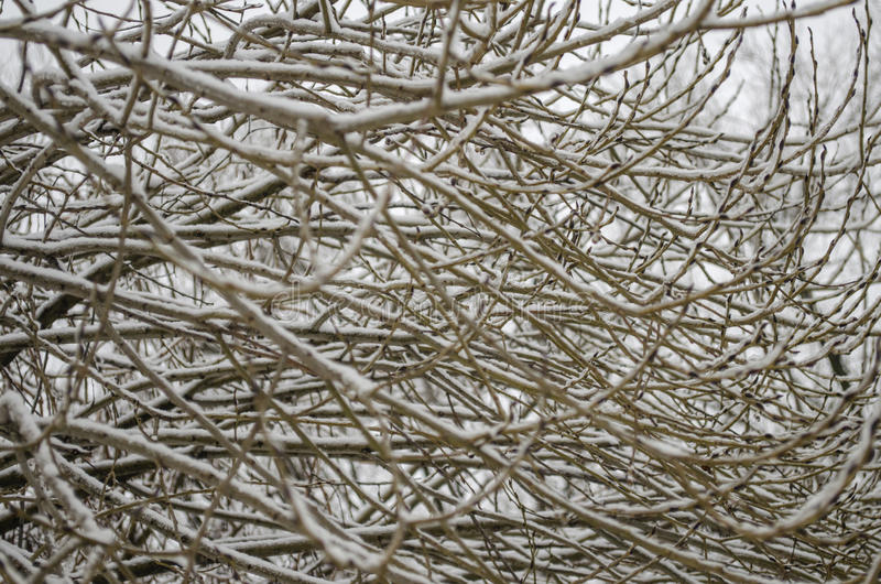 Tree branches without leaves. Covered with snow royalty free stock images