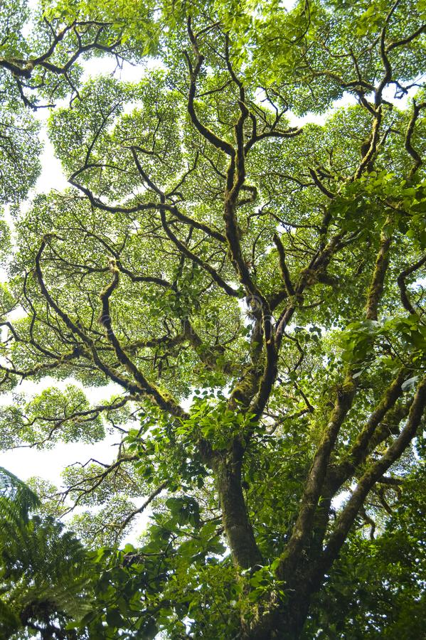Tree Branches and leaves create patterns against the sky. The Monteverde Cloud Forest Reserve was established in 1972 and initially covered some 810 acres of stock photo
