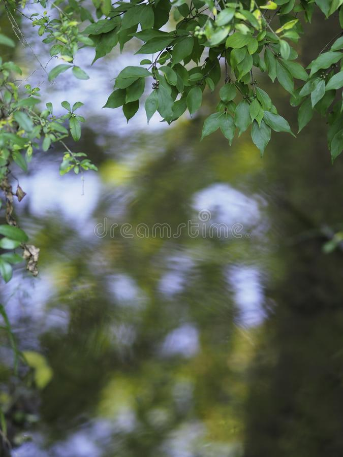 Trees reflecting in a pond stock photography