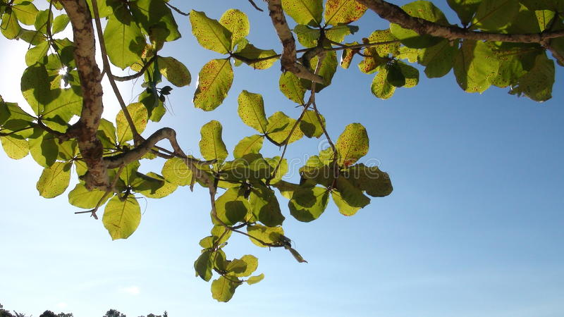 Tree Branches And Leaves. Photo stock photography