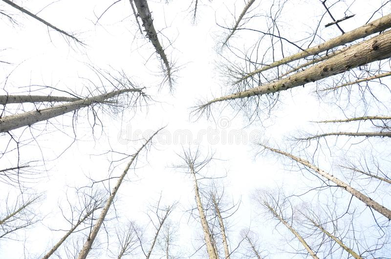 Tree branches without leaves stock photos
