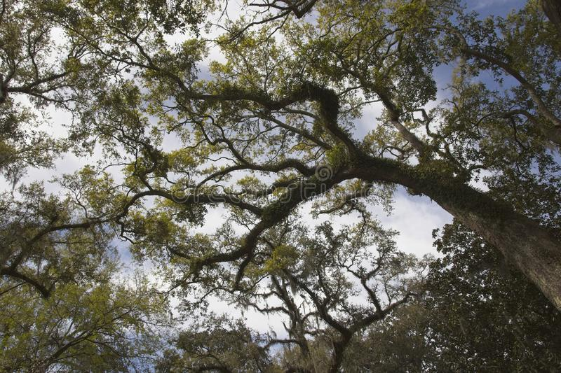 Tree Branches and Leaves Seen from Below stock photos