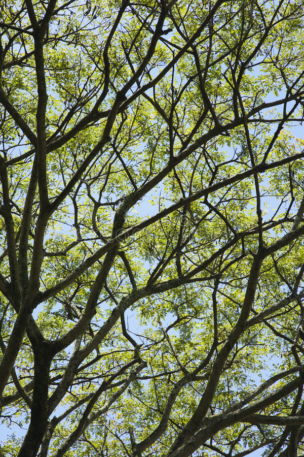 Download Tree Branches With Leaves And Sky. Stock Image - Image of photograph, close: 2037885