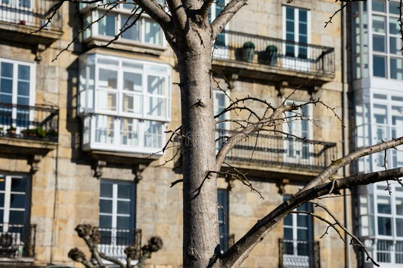 Tree branches with old building facades in the background. Santander, Spain stock photo