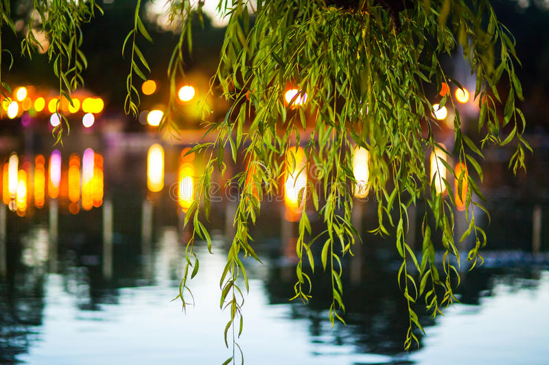 Tree branches. In park at night, lake water and night lights in background stock photos