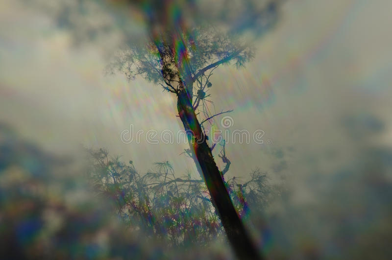 Tree branches prism distortion stock photo