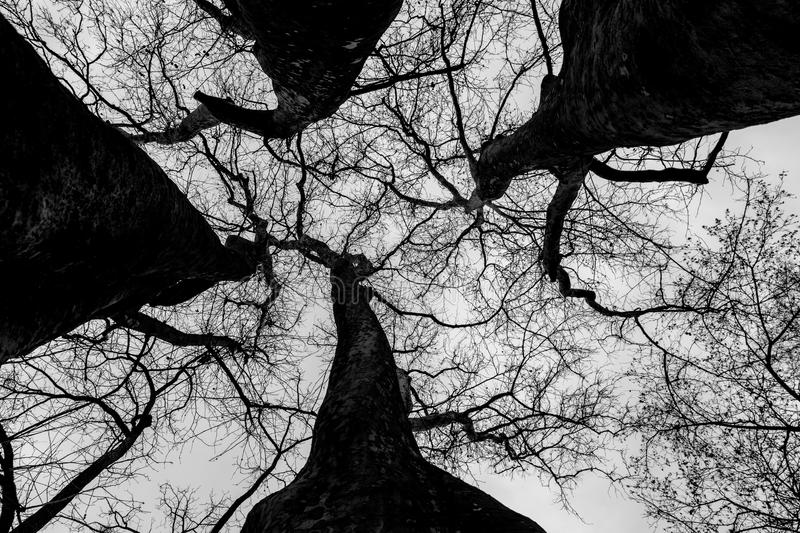 Tree branches seen from below royalty free stock images