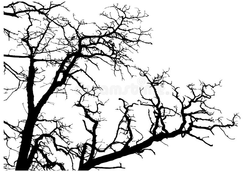 Tree branches silhouette royalty free illustration