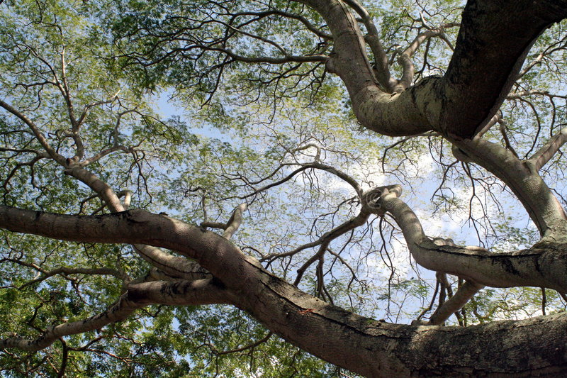Tree branches and sky stock images