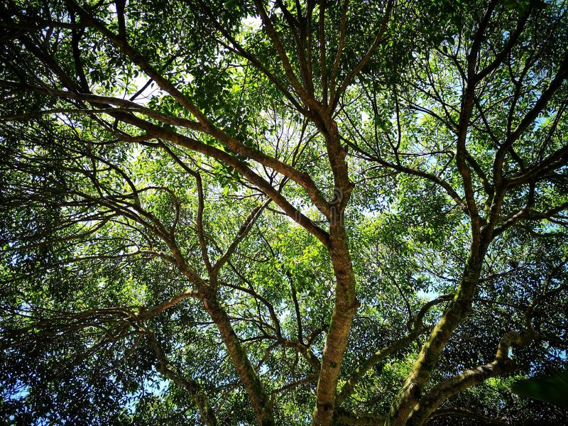 Tree and branches royalty free stock photography