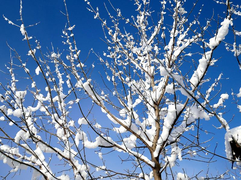 Tree branches under the cover of snow stock photo