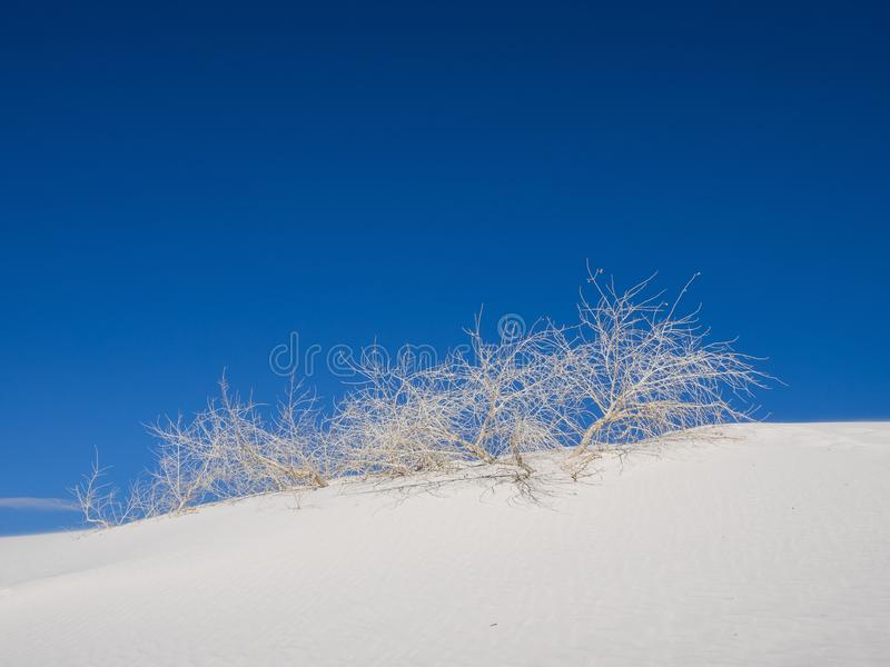 Tree branches on the White Sands National Monument in the Chihuahuan Desert under a blue sky stock images
