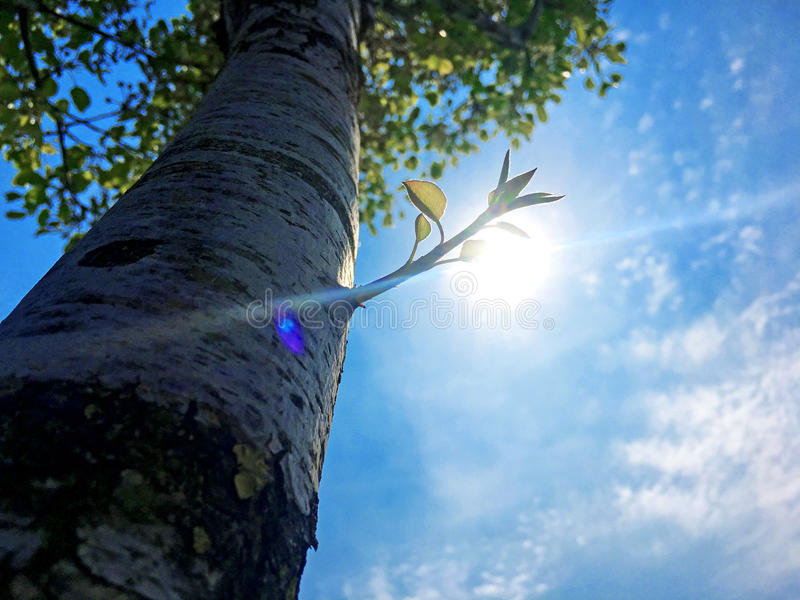 Download Tree and Bud stock photo. Image of blue, sunny, spring - 90854848