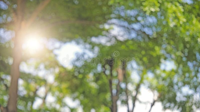 Tree bush on blue sky and sunshine, green leaves,  nature background, bordered with trees at nice sunny weather, Bokeh background. Element of design royalty free stock image