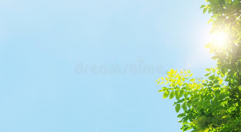 Tree bush on blue sky and sunshine, green leaves,  nature background. Bordered with trees at nice sunny weather royalty free stock photo